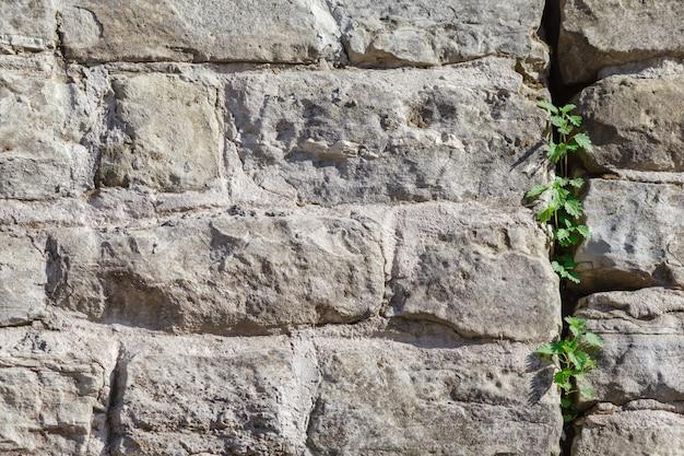 Старая каменная стена с плющом в качестве стены