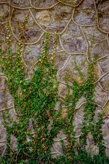 Старая каменная стена с плющом.