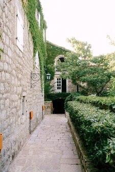 ツタの茂みや古代の木々に舗装石の建物で舗装された旧市街の古い通り