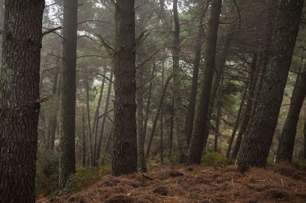 Старые высокие деревья в красивом лесу