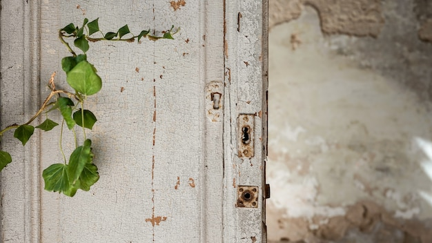 Old textured wooden door with vegetation
