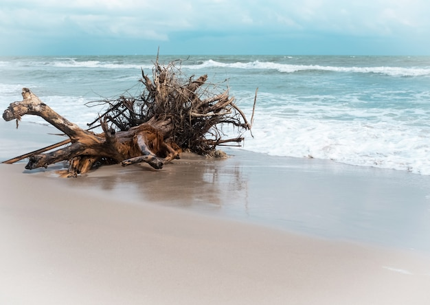 The old timber on beach background, white sea wave, clear sand, beauty by nature