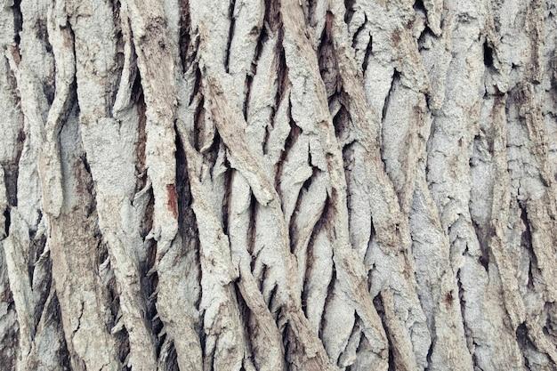 Фоновая текстура коры старого дерева