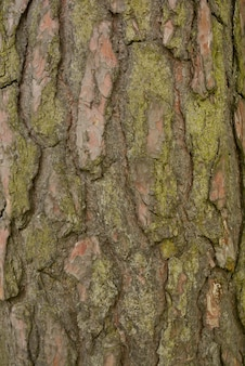 Old tree bark background