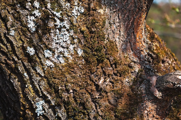 Old tree bark for natural textured
