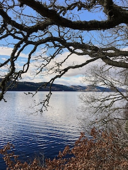 Old tree by the lake. old oak on the background of the lake. blue water. loch ness