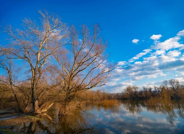 冬の水辺の古い木