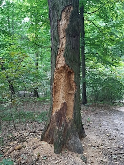 Old tree eaten by insects with a clear structure