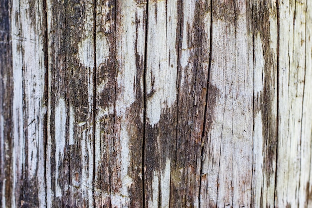 An old tree. fence. concept background and texture.