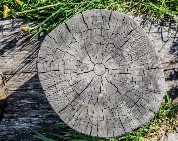 На фоне старых пней видны трещины и трещины, исходящие от центра.