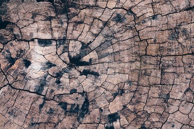 Old tree stump texture backgroud wooden nature texture table top