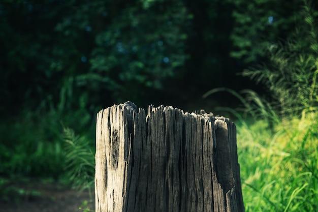 시간이 지나면 썩어가는 오래된 나무 그루터기