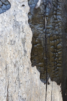 Старое дерево с обгоревшей поверхностью