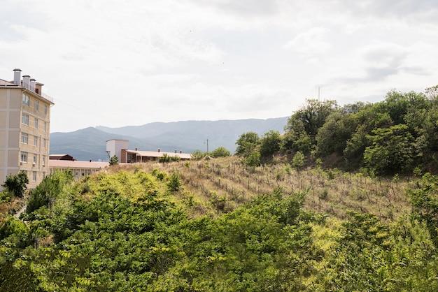 크림의 오래된 포도원 풍경