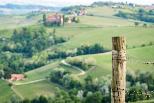 Old vineyard pole in the langhe