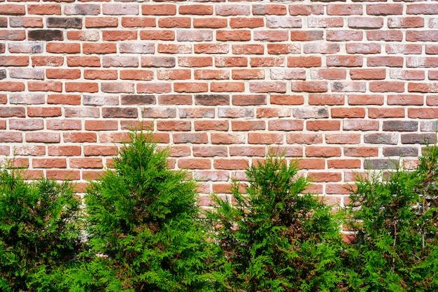 Старая винтажная красная предпосылка текстурированная кирпичной стеной. сажайте декоративные растения у стены.
