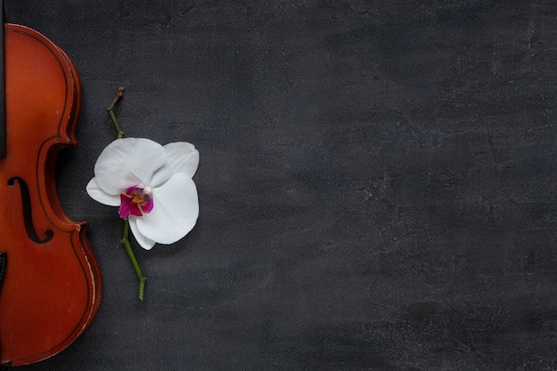 Old violin and white orchid flower. top view, close-up on dark concrete background