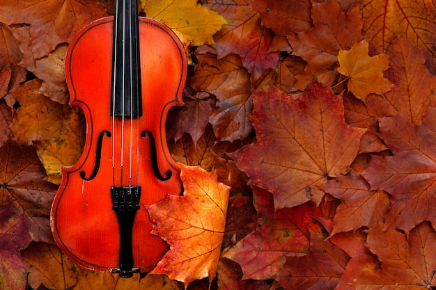 Old violin on yellow autumn maple leaves background. top view, close-up.