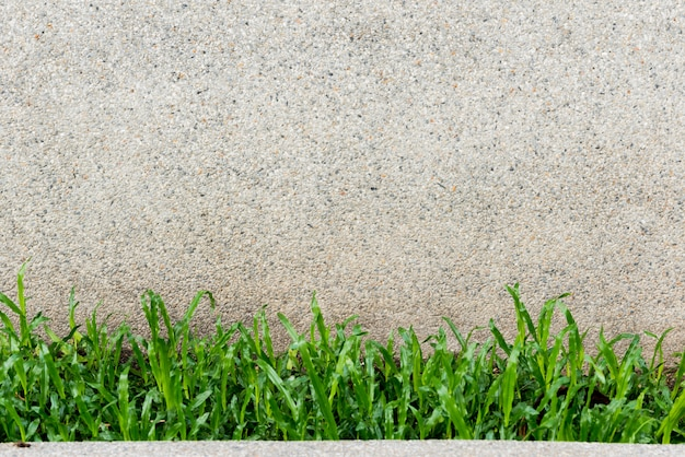 Old wall and green grass background