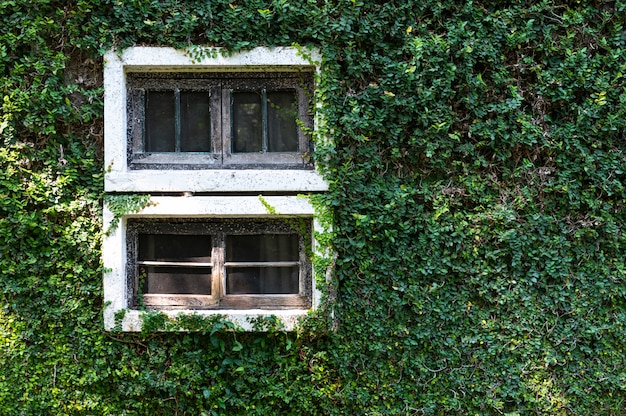 The old windows with plants, vertical garden
