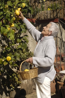Old woman picking fruit from the tree
