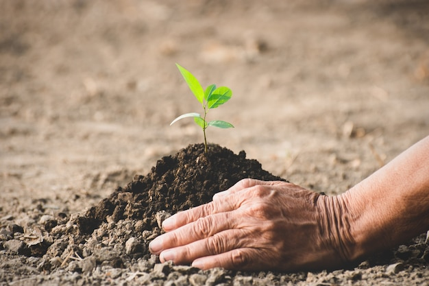 The old woman's hand was planting the seedlings in the dry soil.