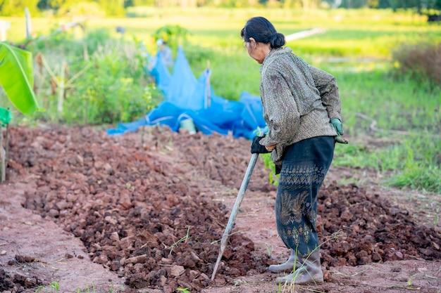 Пожилые женщины, работающие в саду в сельской местности