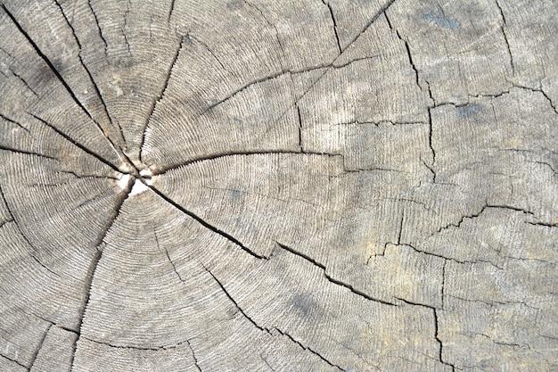 古い木の背景
