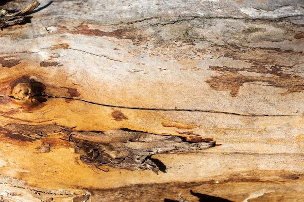 Старое дерево потрескавшейся текстуры, деревянный, дерево