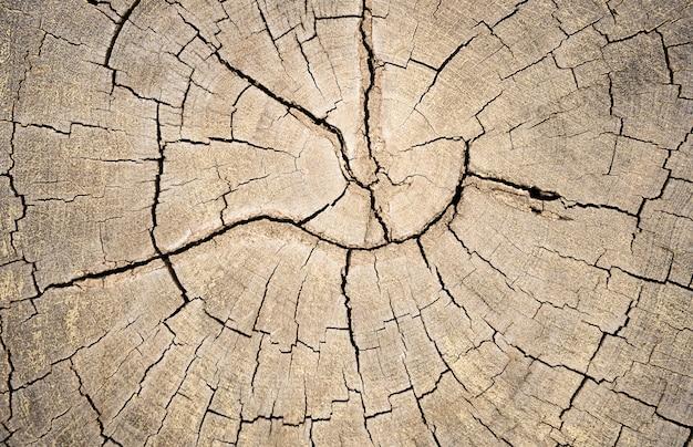 古い木の板または木の切り株のテクスチャ