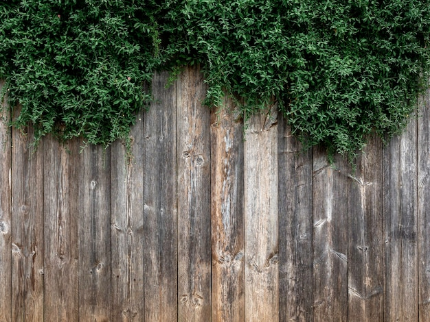 Old wood plank wall with green leaves