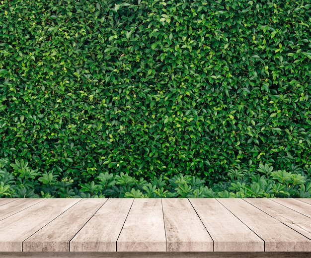 Old wood plank with abstract natural green leaves background for product display