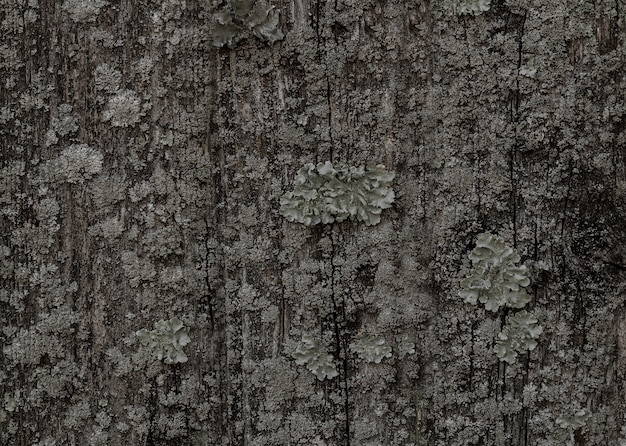 Old wood texture for web