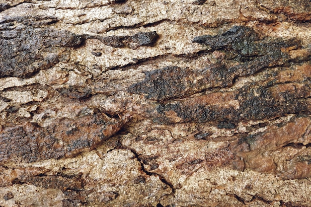 Old wood texture with cracks closeup background