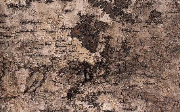 Old wood tree background surface natural pattern