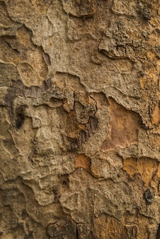Old wood tree bark texture background. pattern of tree bark.