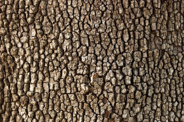 Old wood tree texture background in sunny day