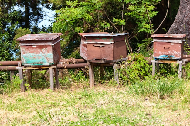 Old wooden beehives on the green meadow