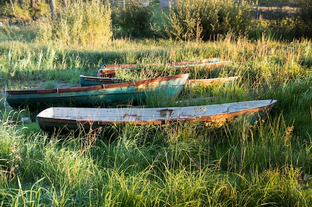 Old wooden boats on an overgrown shore with grass at sunset