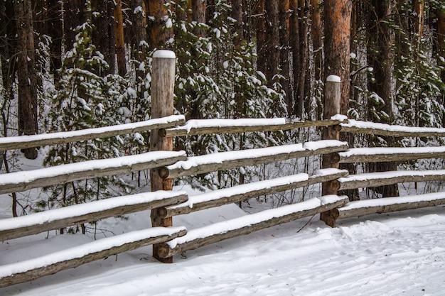 古い木製のフェンスと冬の厚い松の森