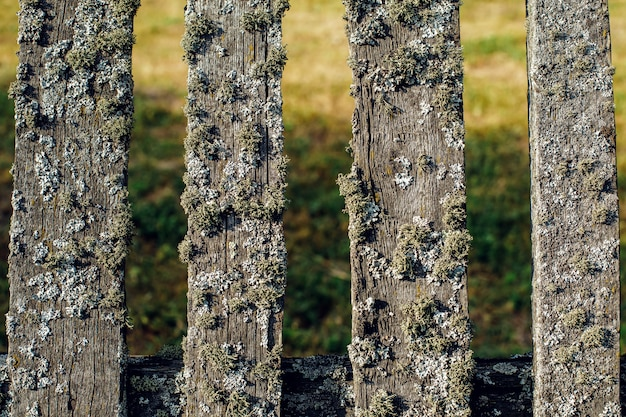 Old wooden fence covered with green moss