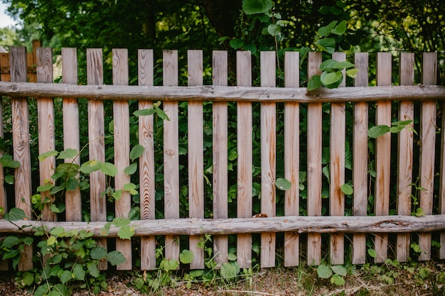 Old wooden fence with greenery