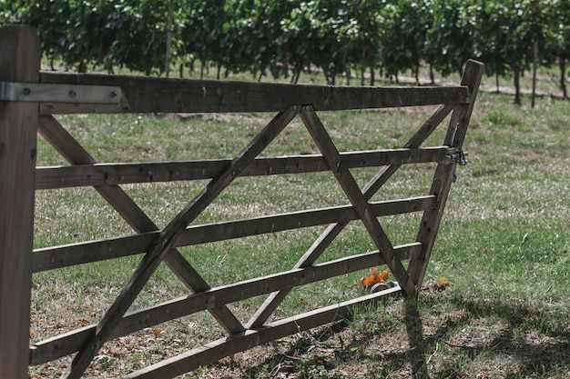 Old wooden gate to a vineyard