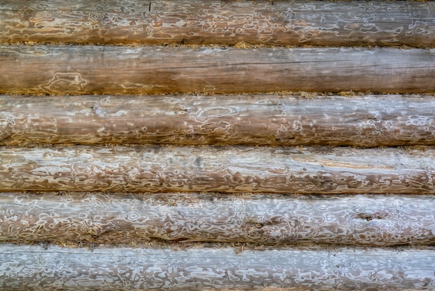 Old wooden logs wall of the house. vintage wood texture.