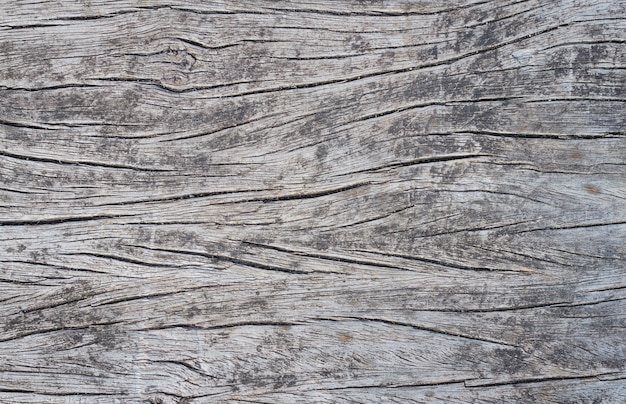 Old wooden natural texture background. tree. surface of dead wood.