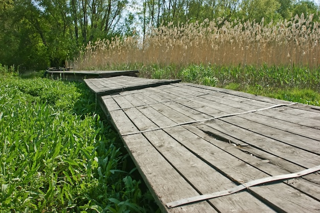Old wooden pier on the marsh in the reeds