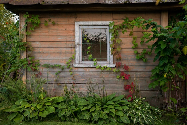Old wooden rustic house. shabby small house with green leaves