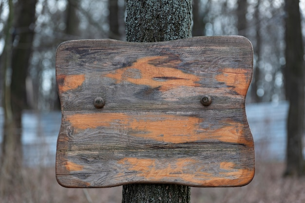 Old wooden sign on tree. rough scuffed wooden surface. copy space.