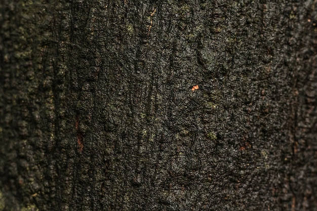 Old wooden texture or trunk background. wood material from the natural wet surface.