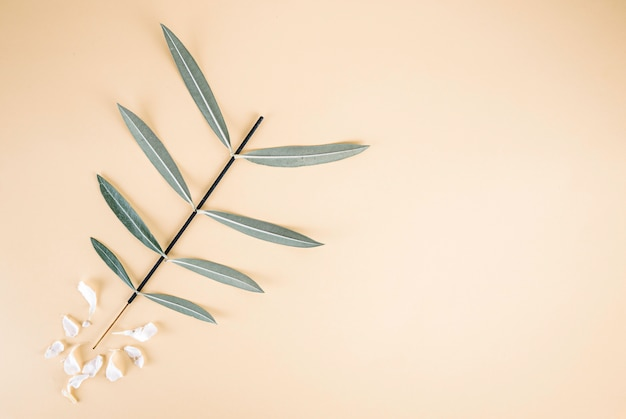 Oleanders leaves on light yellow background with white petals